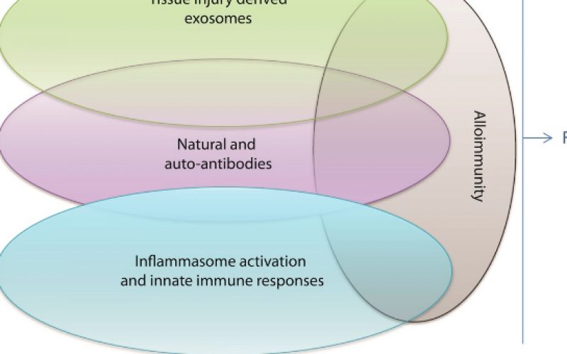 New Answers to Old Conundrums: What Antibodies, Exosomes and Inflammasomes Bring to the Conversation. Canadian National Transplant Research Program International Summit Report