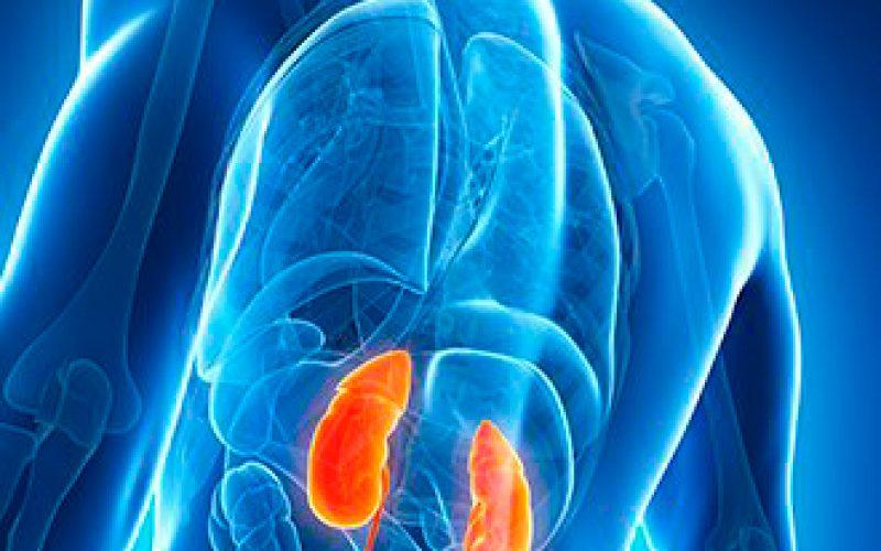 Un proyecto para la mejora de los resultados en trasplante de riñón recibe 6 millones de euros